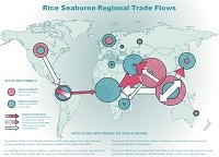 Rice seaborne regional trade flows map